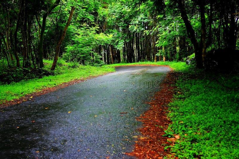 Tyst road1 fotografering för bildbyråer