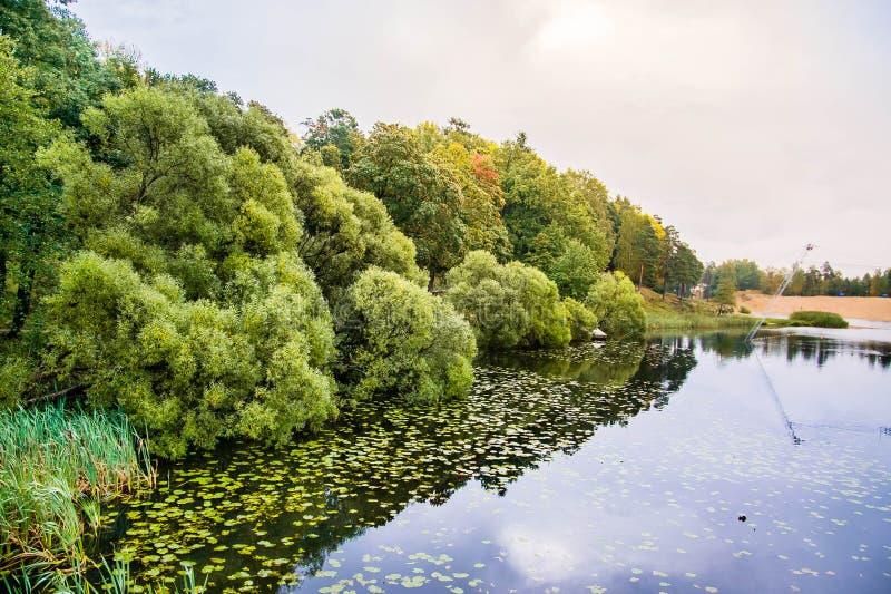Tyst sjö med tät grönska på kusten royaltyfria foton