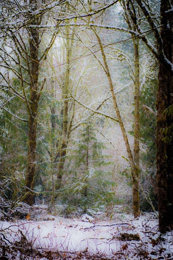 Tyst snöfall i ett skogsbevuxet landskap royaltyfri fotografi