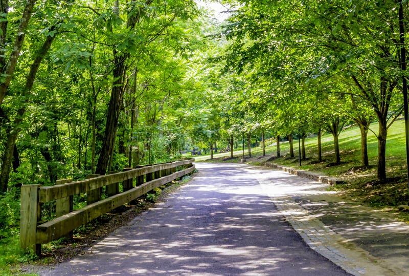 Tyst väg i träden royaltyfri fotografi