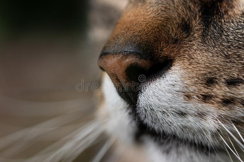 Tysta ned av en katt i closeup arkivbild
