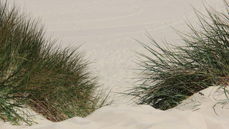 Tysta Sandy Way With Green Grass royaltyfri fotografi