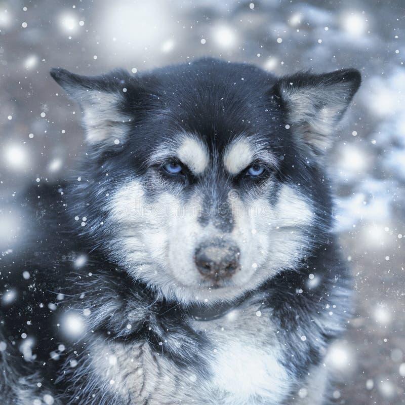 Tystar ned den skrovliga ståenden för den gulliga hunden som är rolig med snöflingor i vinter royaltyfri bild