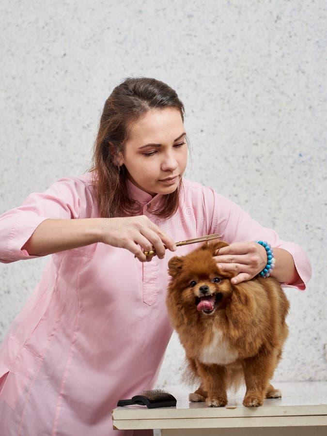 Uña del pie del ` s del perro del corte imagen de archivo libre de regalías