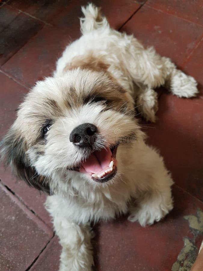 Uśmiech pies zdjęcie stock