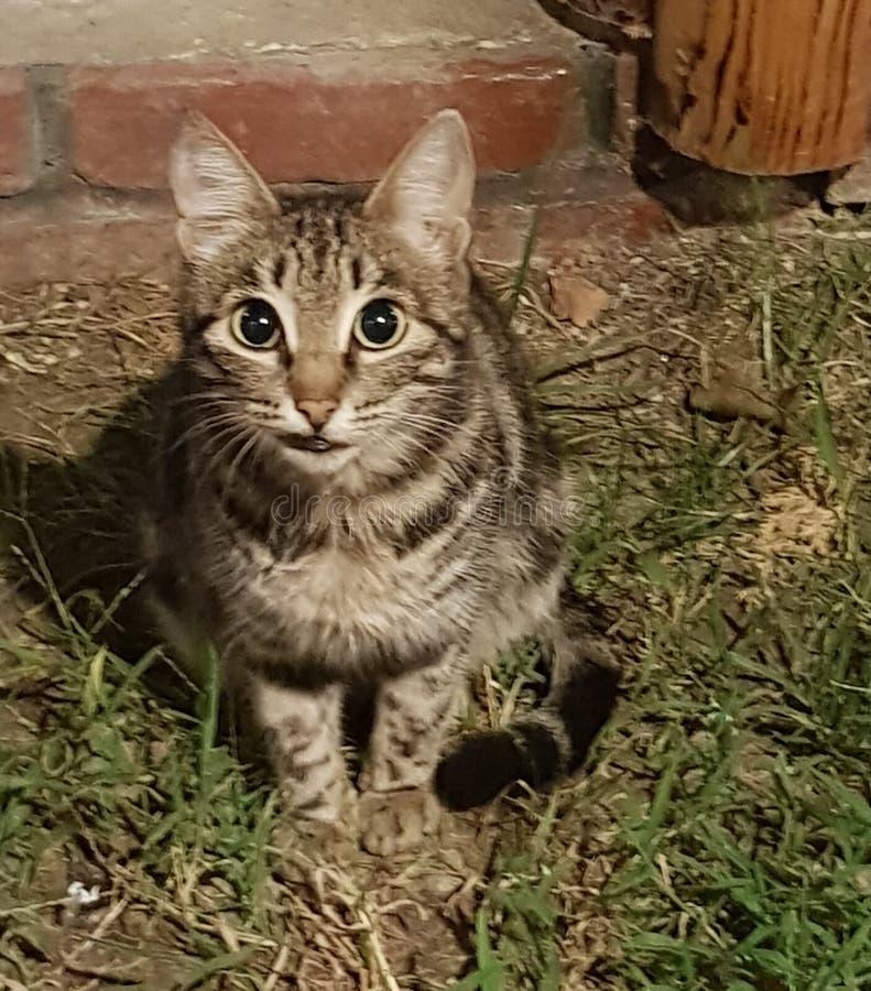 Uśmiechający się kot z nieradym spojrzeniem siedzi na trawie blisko jarda na tle czerwona ściana z cegieł i spojrzenia w zdjęcie stock