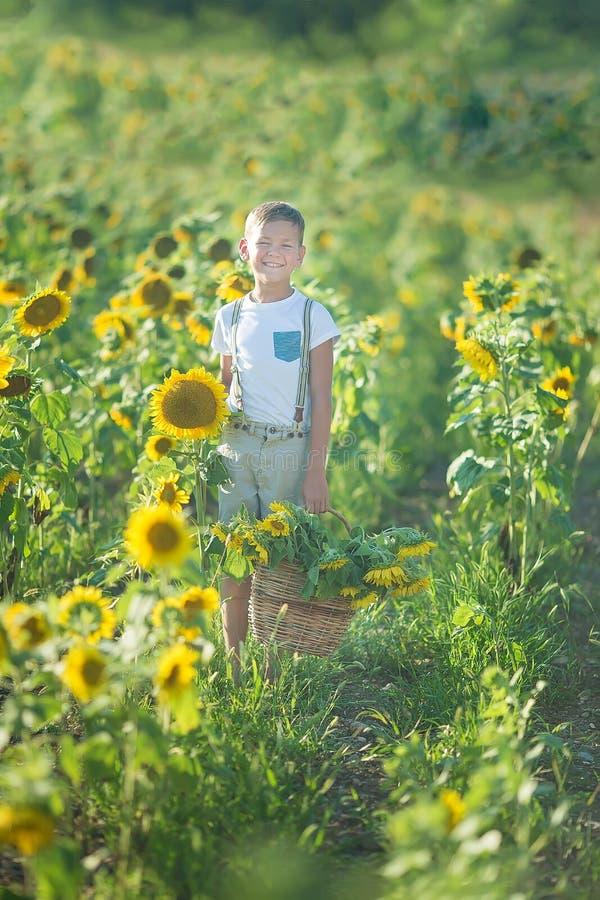 Uśmiechnięta chłopiec z koszem słoneczniki Z słonecznikiem uśmiechnięta chłopiec Śliczna uśmiechnięta chłopiec w polu słoneczniki obraz royalty free