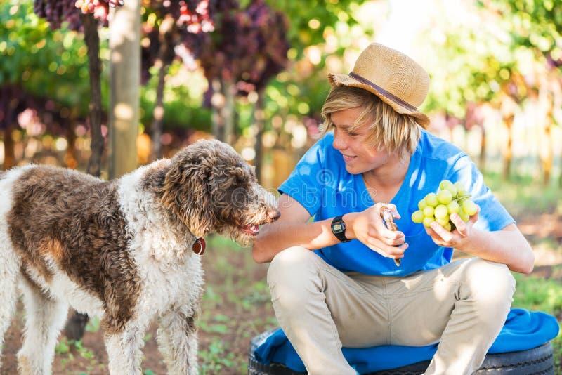 Uśmiechnięta chłopiec z psem w winnicy przy słonecznym dniem fotografia stock