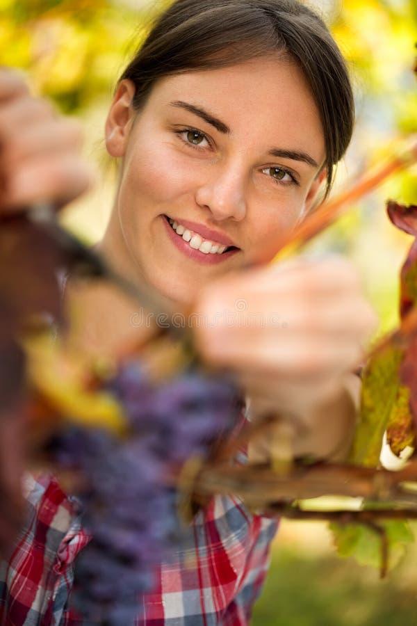 Uśmiechnięta dziewczyna zbiera winogrona obraz royalty free