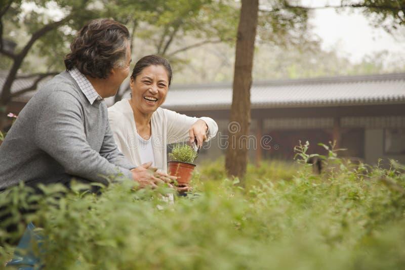 Uśmiechnięta starsza para w ogródzie zdjęcie stock