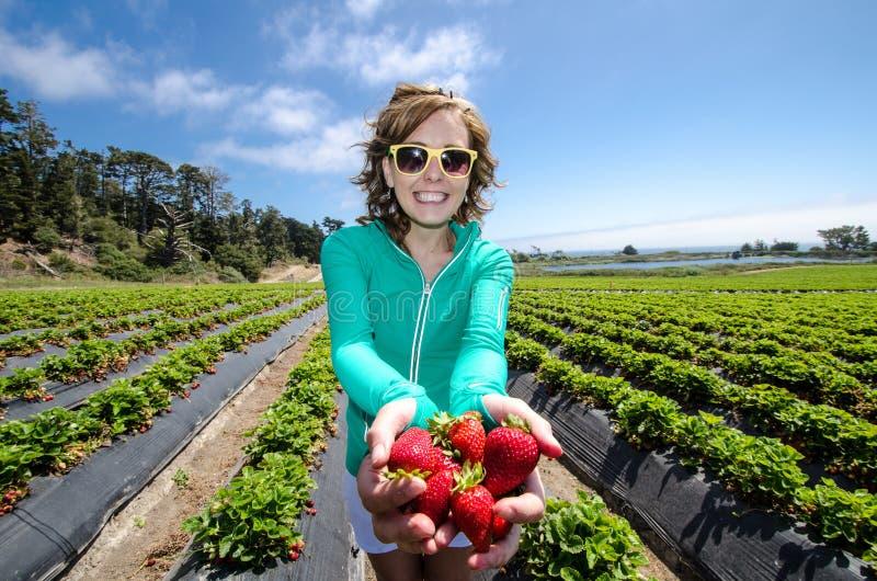 Uśmiechnięte kobiety zrywania truskawki w polu przy gospodarstwem rolnym, mienie wsad dojrzałe jagody w ona ręka obrazy royalty free