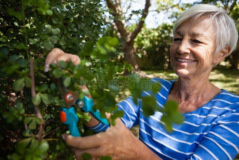Uśmiechnięte starsze kobieta arymażu rośliny z przycinać strzyżenia zdjęcie stock