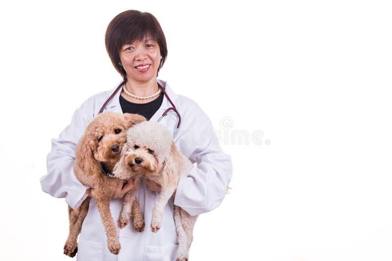 Uśmiechnięty Azjatycki żeński weterynaryjny doktorski przytulenia zwierzęcia domowego pies zdjęcie royalty free