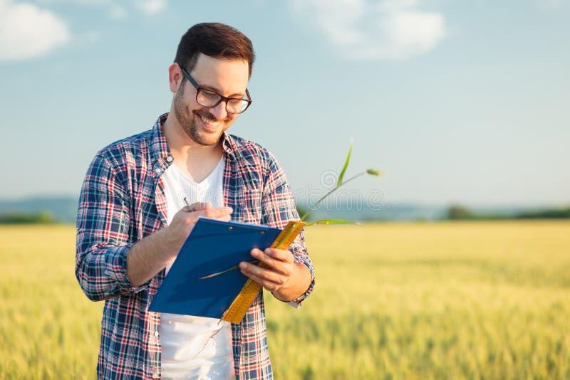 Uśmiechnięty młody agronom lub średniorolny pomiarowy pszeniczny roślina rozmiar w polu, pisze dane w kwestionariusz zdjęcia royalty free