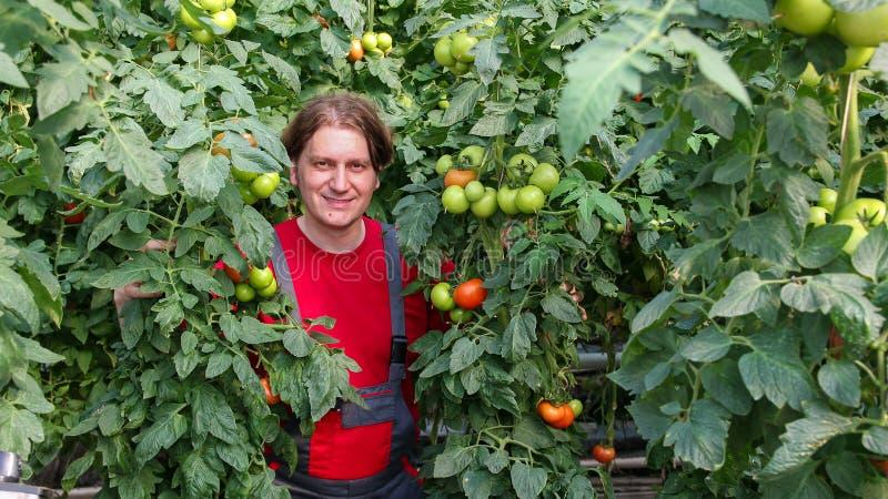 Uśmiechnięty rolnik w Handlowej szklarni obraz stock