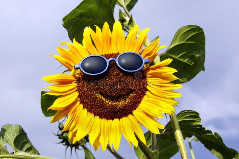 Download Uśmiechnięty Słonecznik Z Okularami Przeciwsłonecznymi Zdjęcie Stock - Obraz złożonej z ikona, kolorowy: 41955036