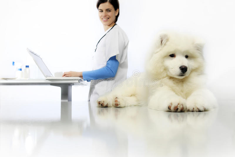 Uśmiechnięty weterynarz egzamininuje psa na stole z komputerem fotografia stock