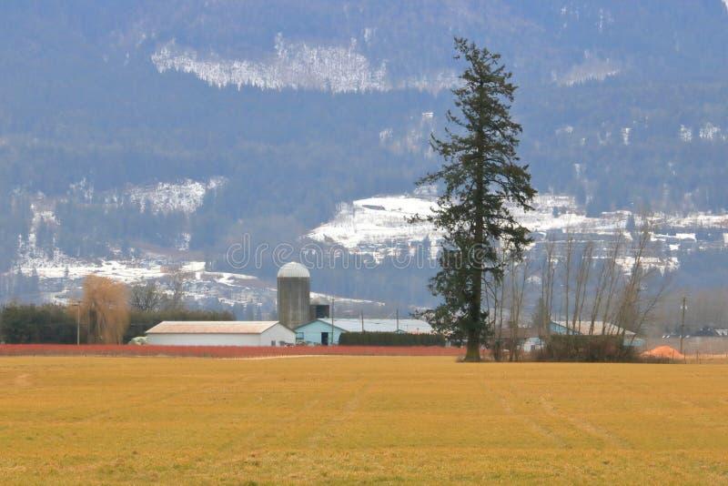 Uśpiony Dolinny zima obszar trawiasty w Kanada zdjęcia royalty free