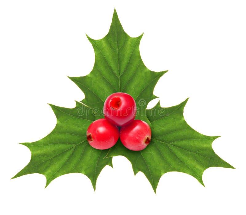 Uświęcona jagodowa Bożenarodzeniowa dekoracja odizolowywająca zdjęcie royalty free
