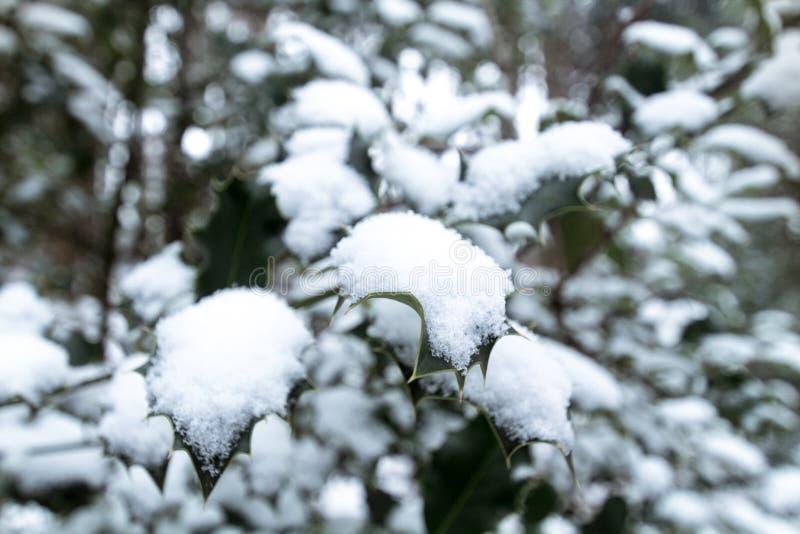 Uświęcone gałąź zakrywać z śniegiem obraz stock