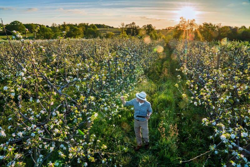 Używać cyfrową pastylkę, jabłczany hodowca sprawdza jego jabłonie obraz royalty free
