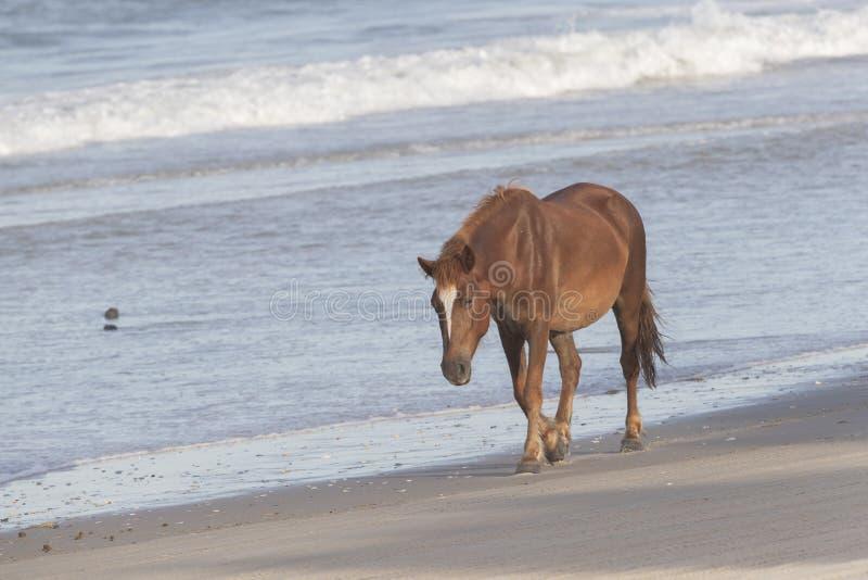 ?u?ere Bank-wilde Pferde auf dem Strand lizenzfreies stockbild