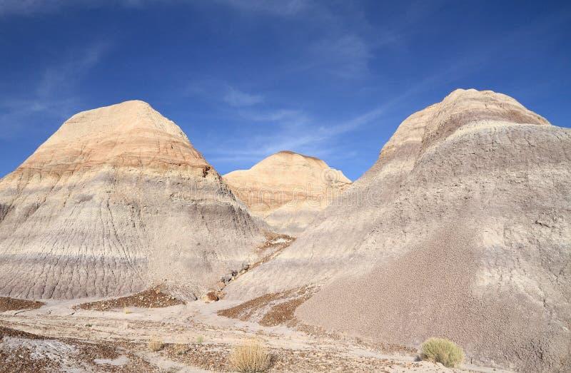 U.S.A., AZ: Foresta petrificata NP - calanchi variopinti fotografia stock libera da diritti