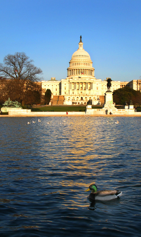 Download U.S. Capitol And Mallard Duck In Reflecting Pond Stock Photo - Image: 4612266