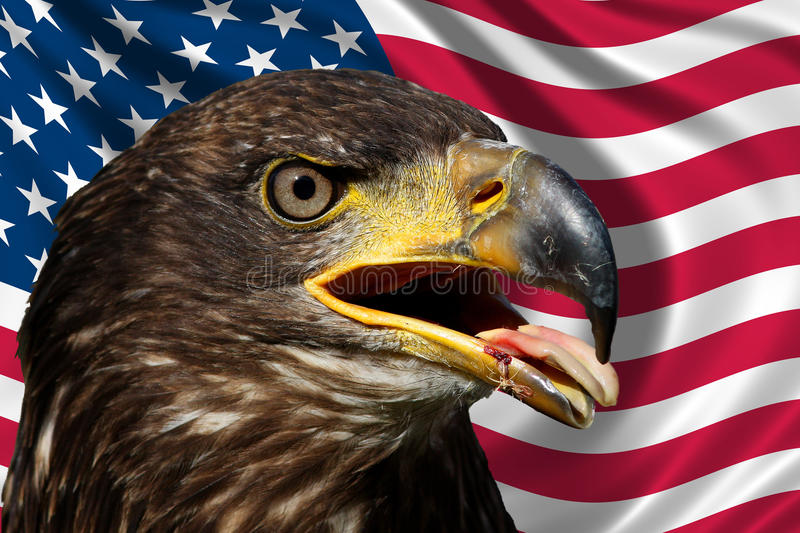 Download U.S.A flag with eagle stock image. Image of army, haliaeetus - 10831529