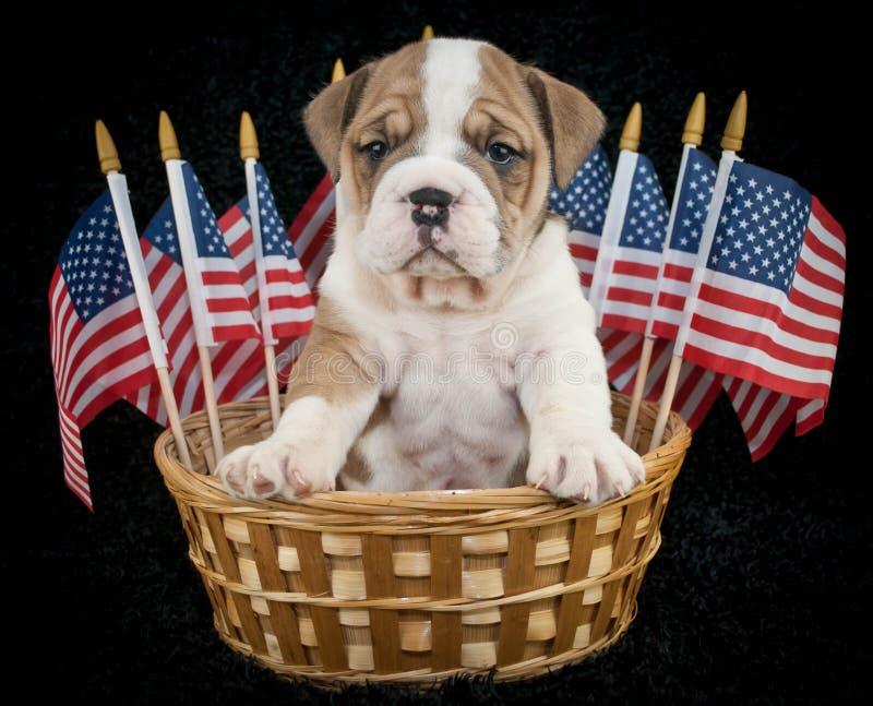 U.S.A. Puppy stock foto's