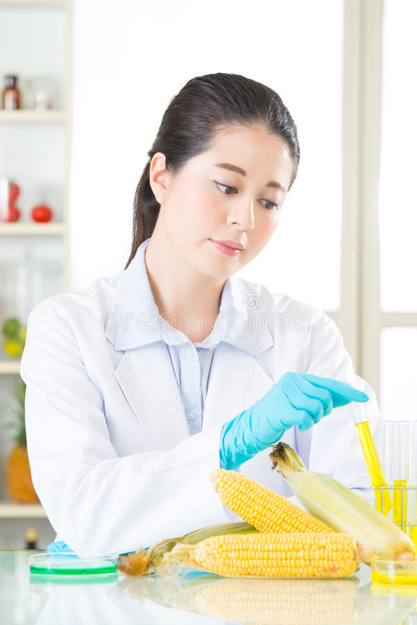 U zult genetische modificatie van voedsel houden nadat u de test kent stock foto