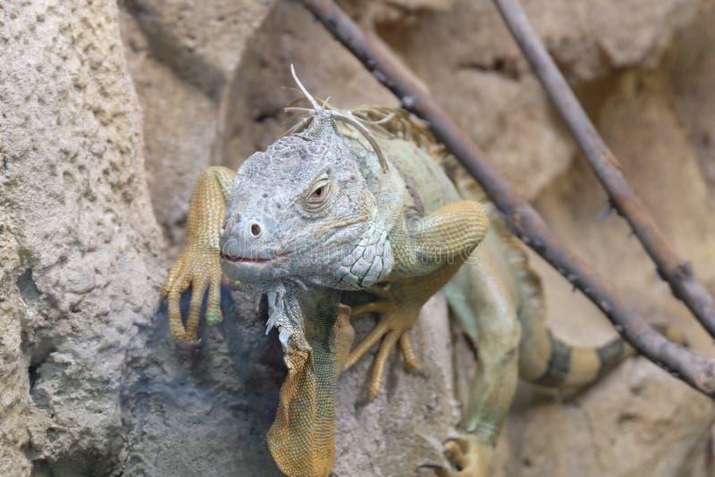 UAE, Abu Dhabi Zoo lizenzfreies stockfoto