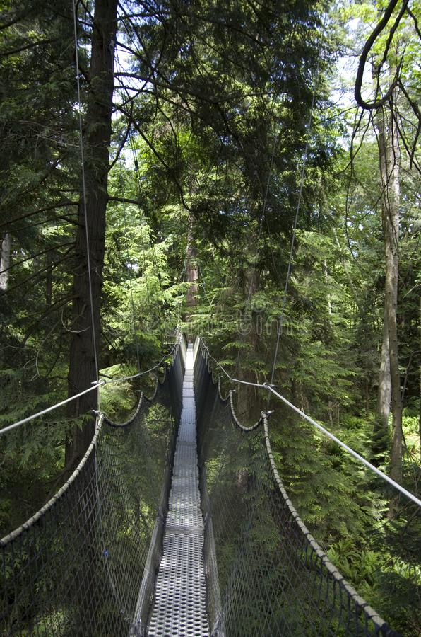 UBC botanical garden canopy walk. UBC botanical garden has a nice canopy in the forest . Vancouver Canada stock images