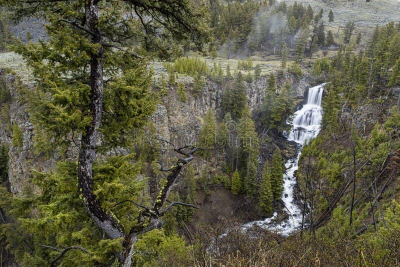 Ubriacone Undine Falls in Yellowstone immagini stock libere da diritti