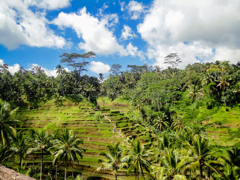 Ubud, Bali stockbilder