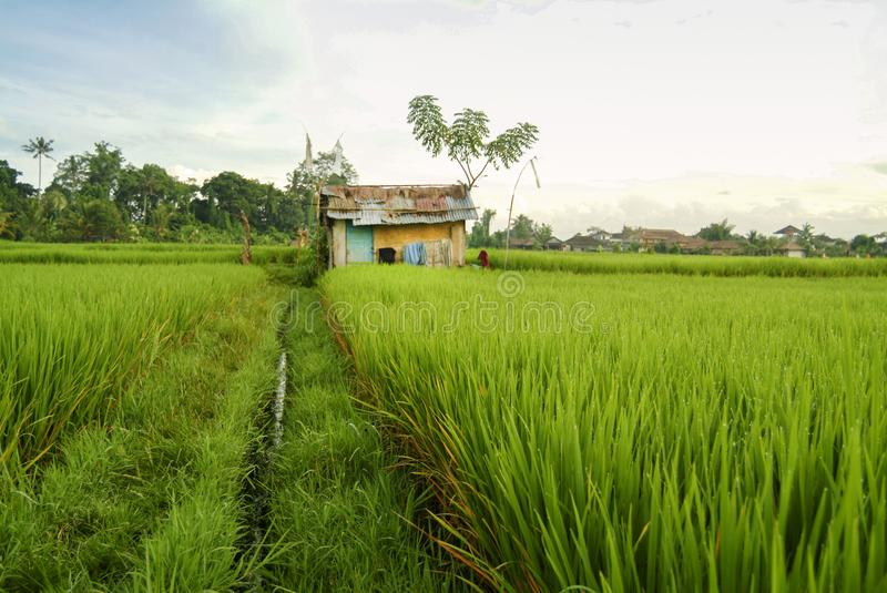 Rice Terrace Worker Huts on a Field in Bali stock image