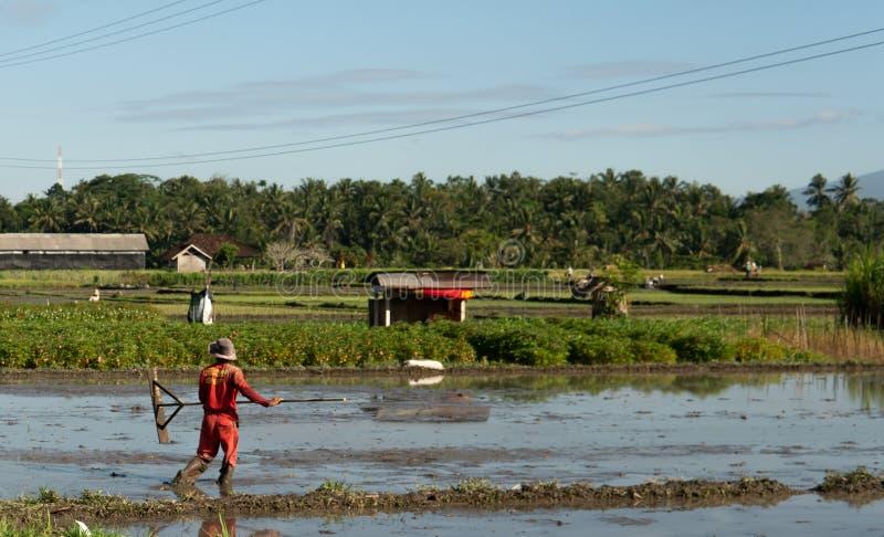 Ubud, Bali, Indonésia 7 de maio de 2019: O homem de Unitedtified trabalha no campo do arroz em Ubud, Bali, Indonésia foto de stock royalty free
