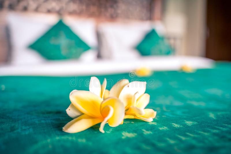 Luxury hotel room interior. Bed decorated with tropical flowers before guest arrival. Ubud, Bali, Indonesia - January 2019: Luxury hotel room interior. Bed royalty free stock photo