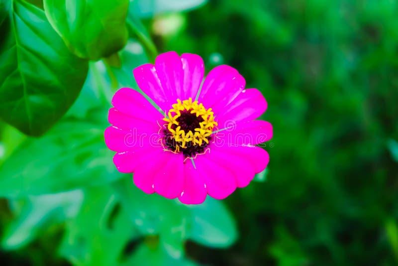 Ubud bali Indonesia. Travel photography royalty free stock image