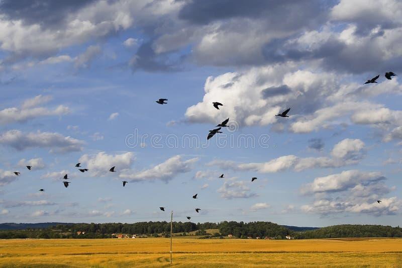 Download Uccelli immagine stock. Immagine di esterno, volo, radura - 3134917
