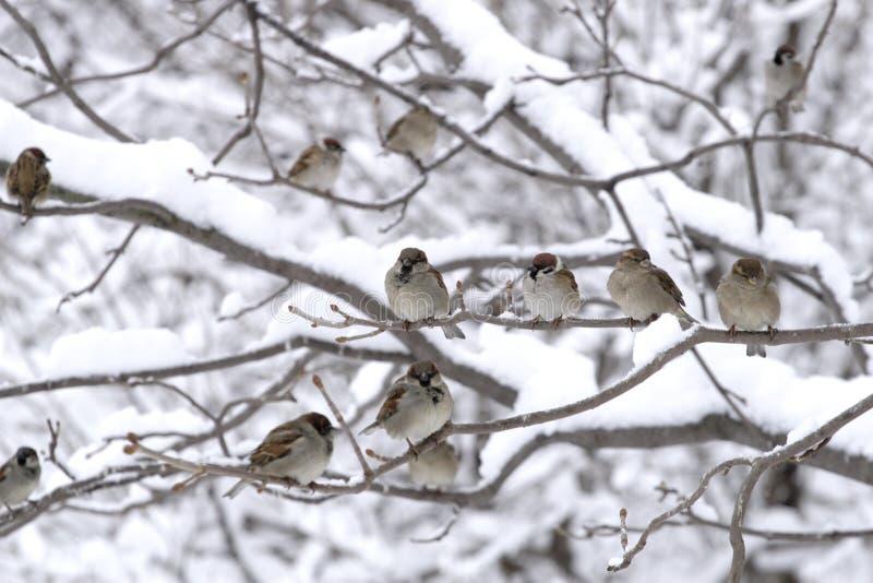 Uccelli fotografia stock