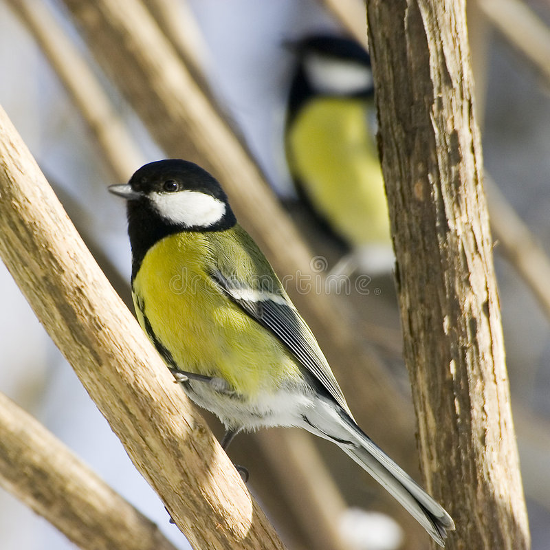 Uccelli immagini stock libere da diritti