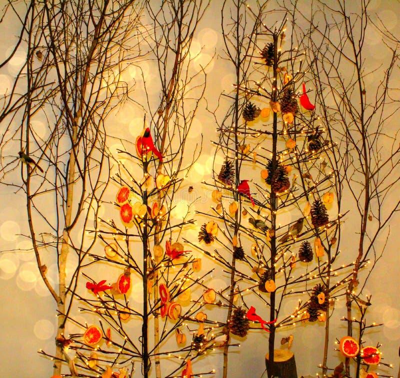 Uccelli in alberi immagine stock libera da diritti