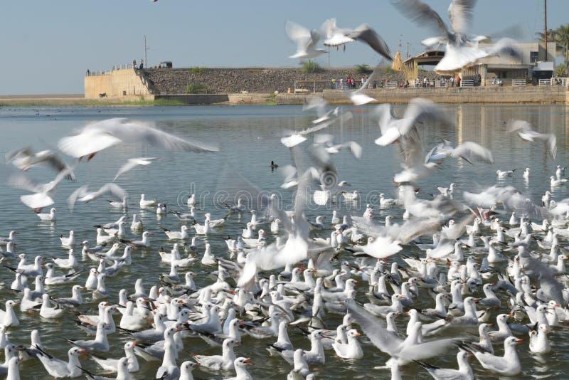 Uccelli allegri che provano ad afferrare alimento dato loro fotografie stock