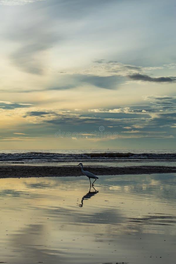Uccelli bianchi sulla spiaggia e sul sole di mattina fotografia stock