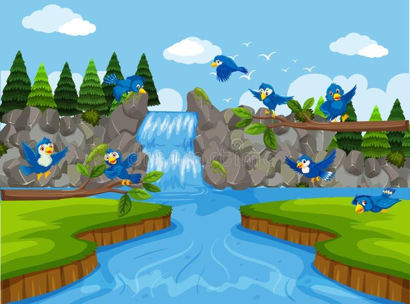 Uccelli blu nella scena della cascata illustrazione vettoriale