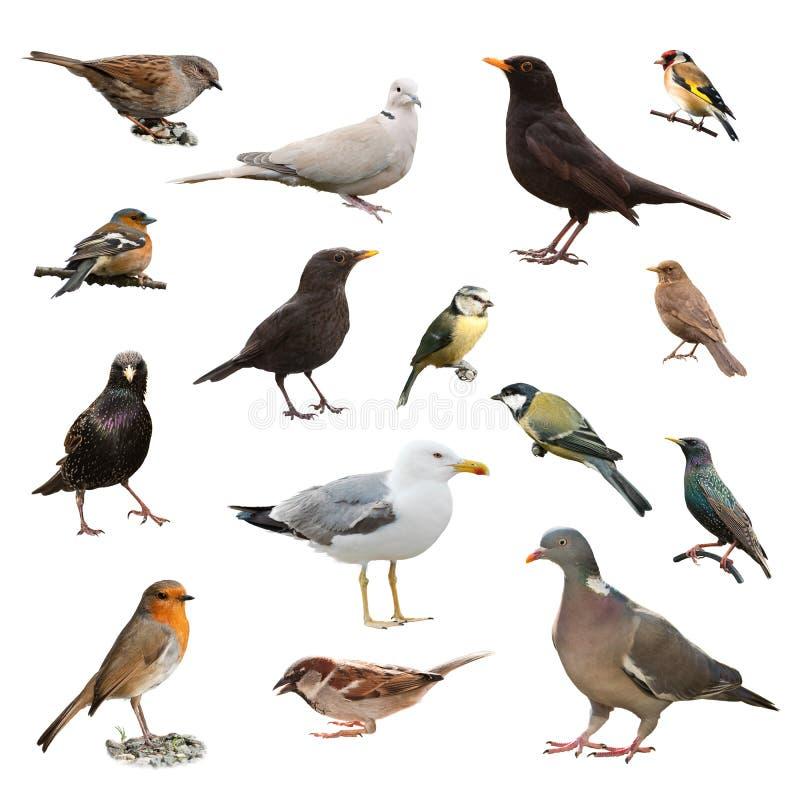 Uccelli britannici del giardino fotografie stock