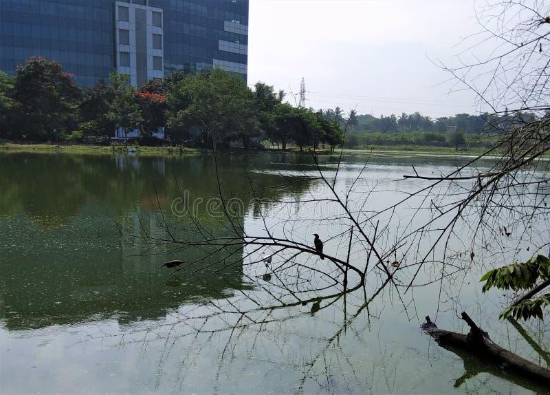 Uccelli che cercano alimento in acqua del lago fotografia stock libera da diritti