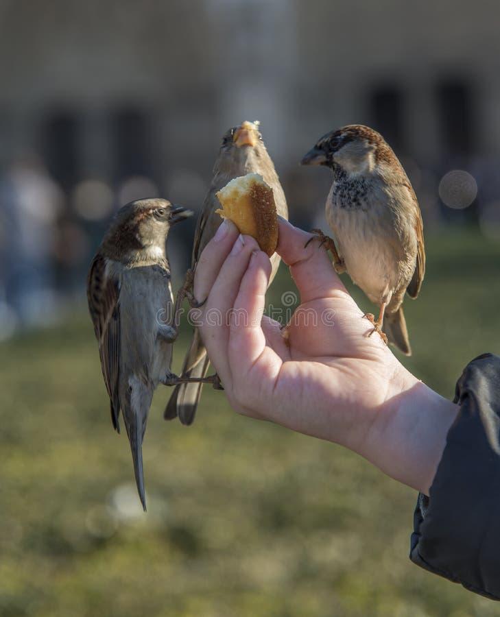 Uccelli che mangiano dalla mano del bambino