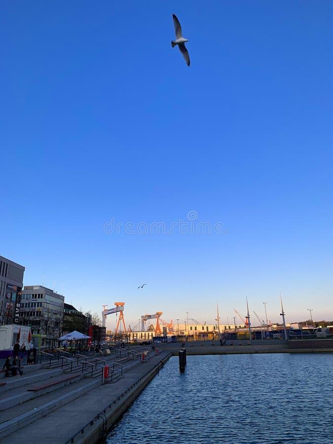 Uccelli che volano a Kiel fotografia stock